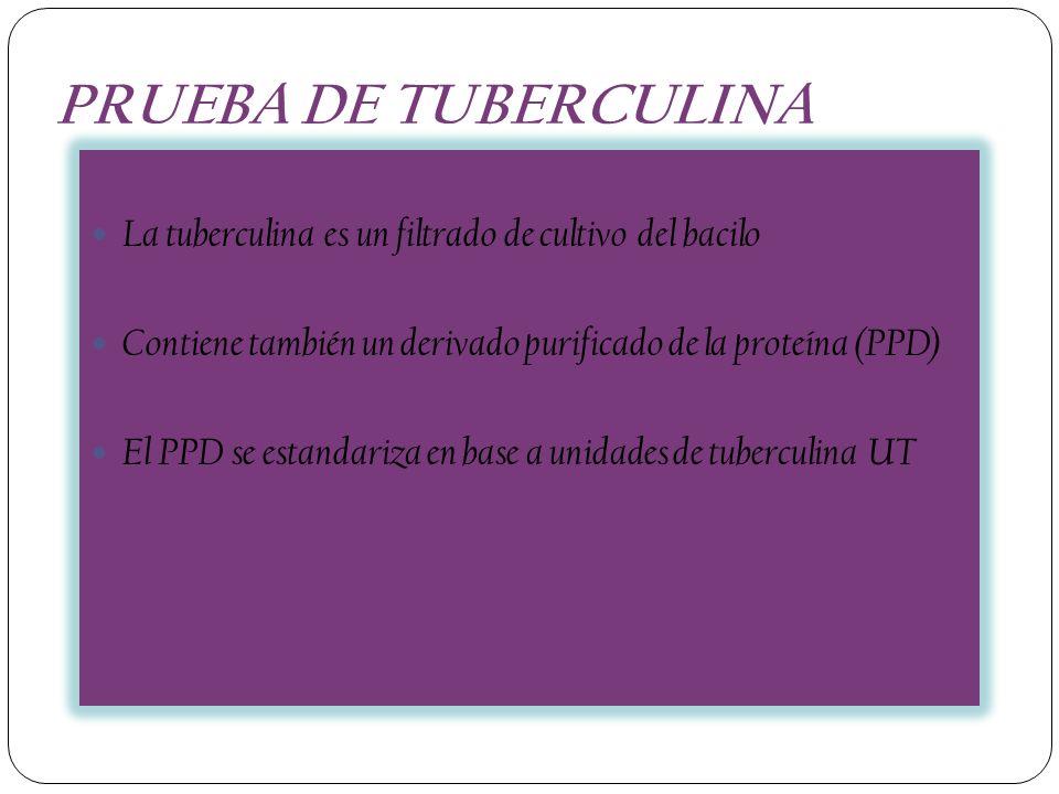 PRUEBA DE TUBERCULINA La tuberculina es un filtrado de cultivo del bacilo. Contiene también un derivado purificado de la proteína (PPD)