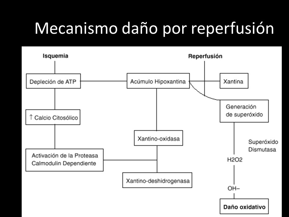 Mecanismo daño por reperfusión