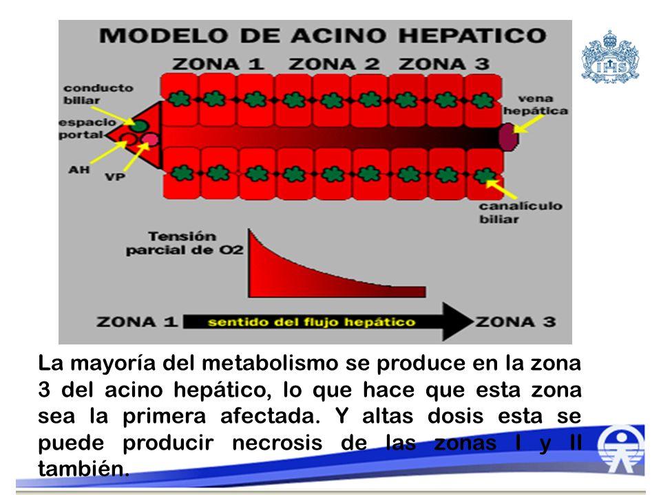 La mayoría del metabolismo se produce en la zona 3 del acino hepático, lo que hace que esta zona sea la primera afectada.