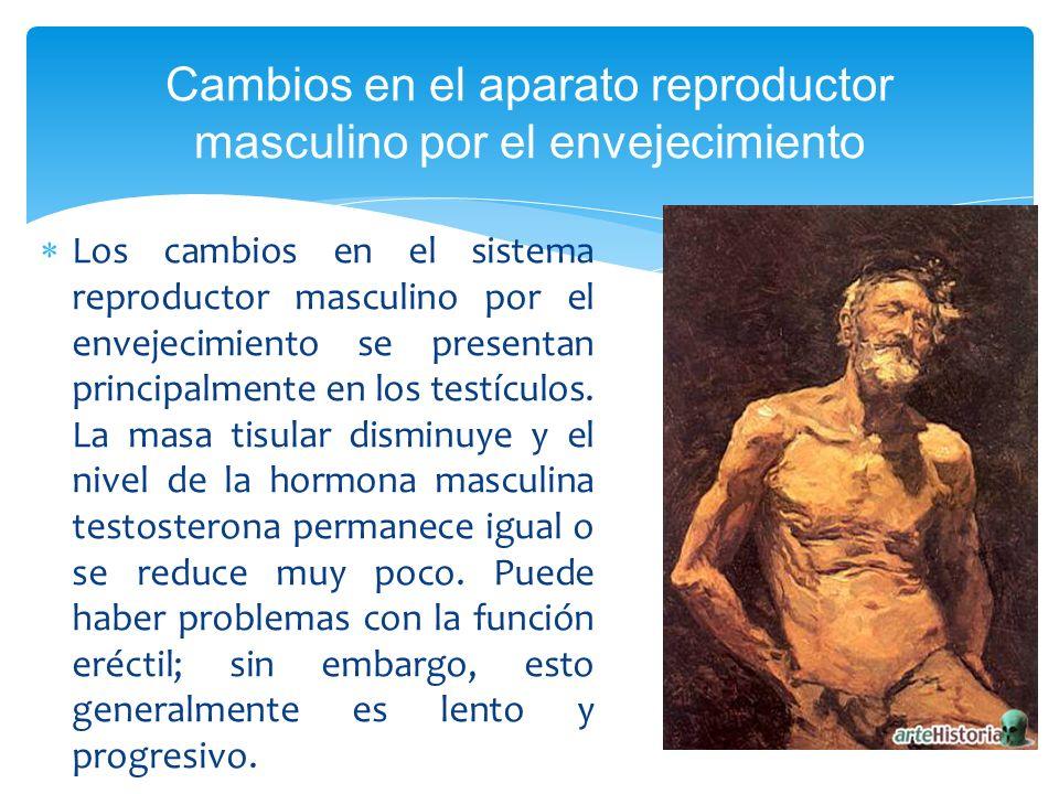 Cambios en el aparato reproductor masculino por el envejecimiento