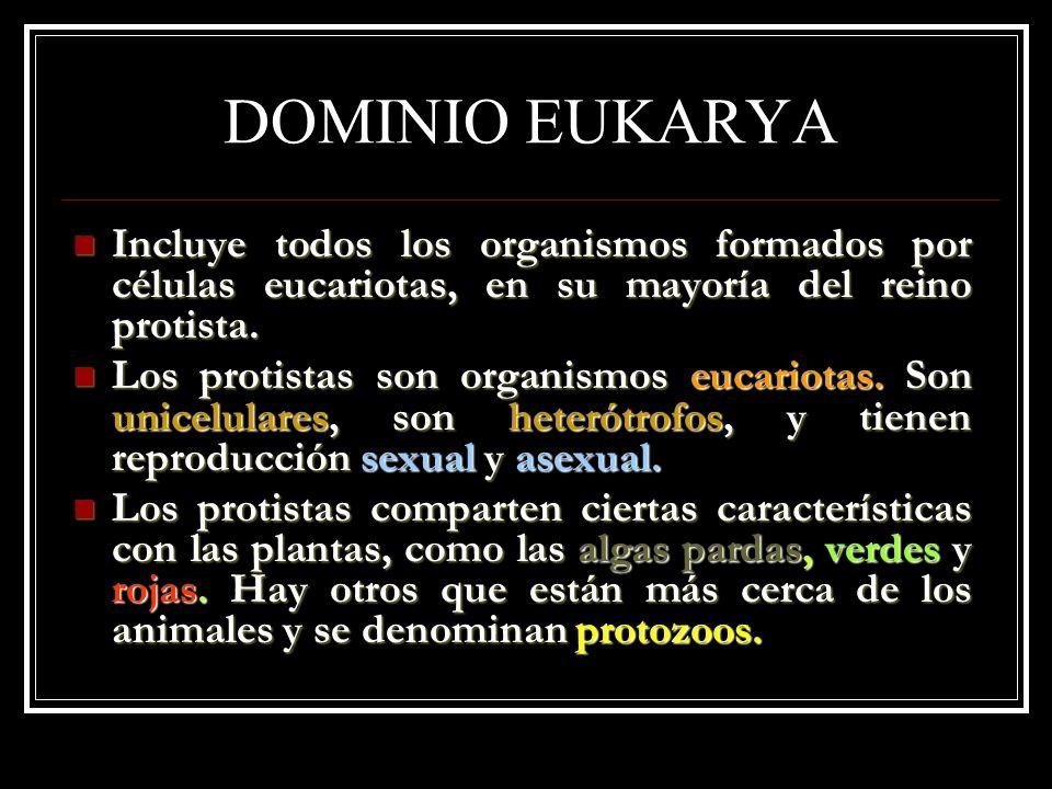 DOMINIO EUKARYA Incluye todos los organismos formados por células eucariotas, en su mayoría del reino protista.