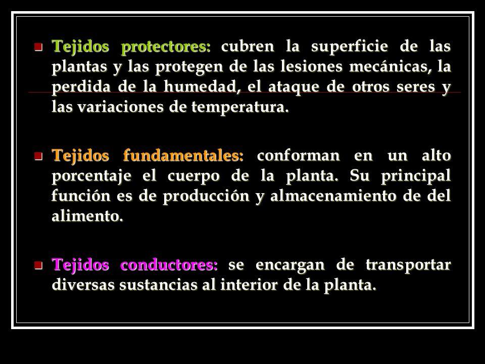 Tejidos protectores: cubren la superficie de las plantas y las protegen de las lesiones mecánicas, la perdida de la humedad, el ataque de otros seres y las variaciones de temperatura.