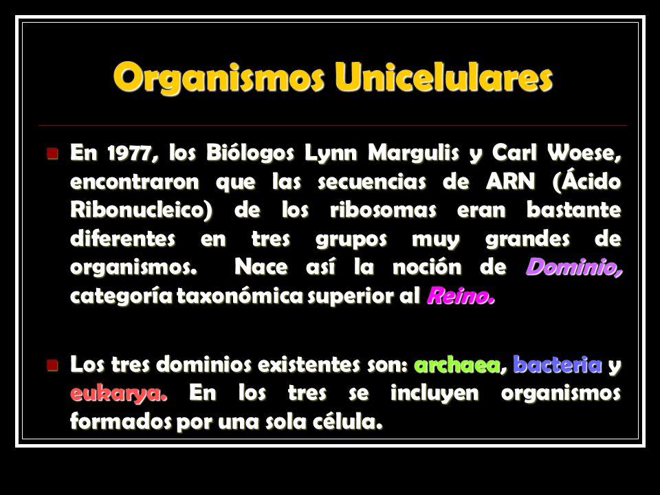 Organismos Unicelulares