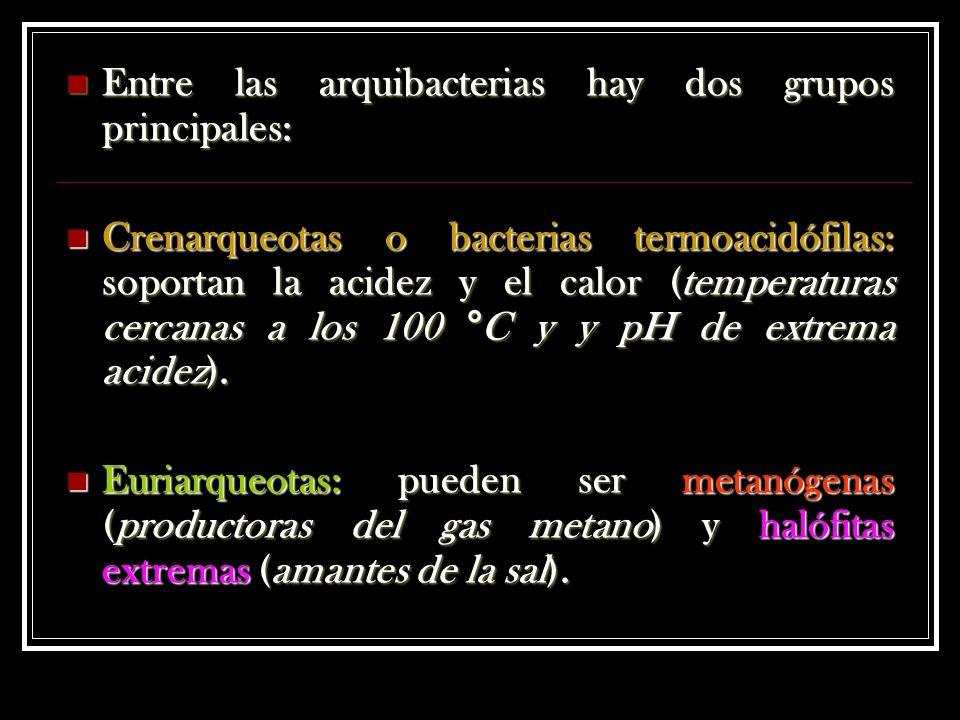 Entre las arquibacterias hay dos grupos principales:
