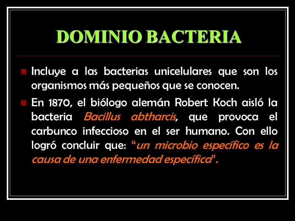 DOMINIO BACTERIA Incluye a las bacterias unicelulares que son los organismos más pequeños que se conocen.