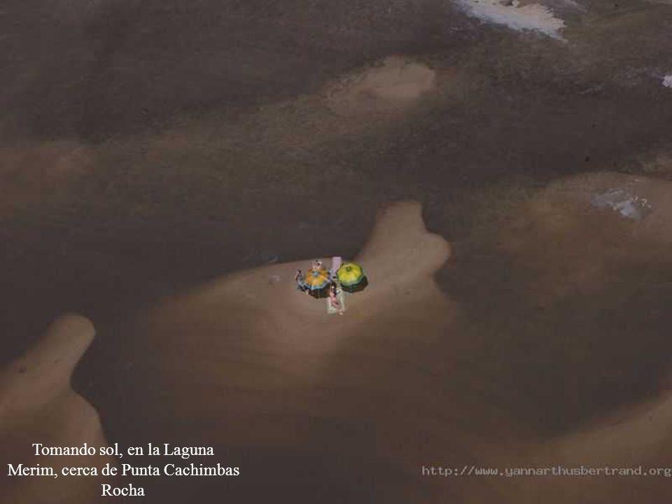Tomando sol, en la Laguna Merim, cerca de Punta Cachimbas
