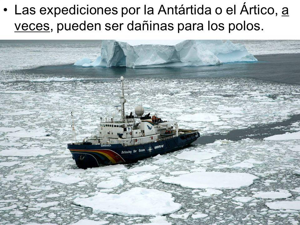 Las expediciones por la Antártida o el Ártico, a veces, pueden ser dañinas para los polos.