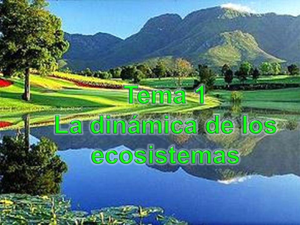 Tema 1 La dinámica de los ecosistemas