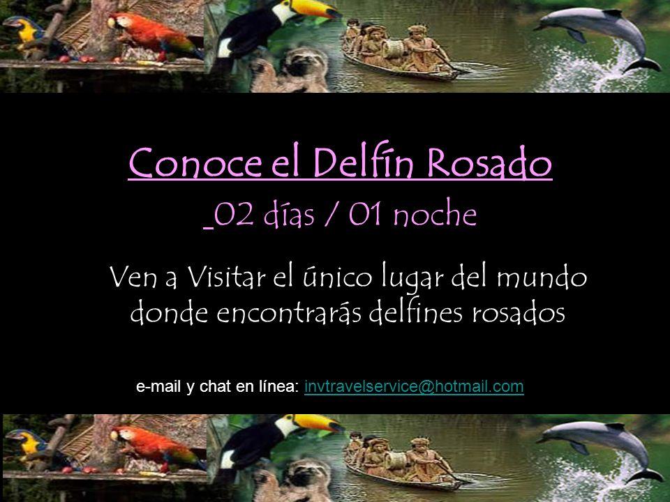 Conoce el Delfín Rosado 02 días / 01 noche