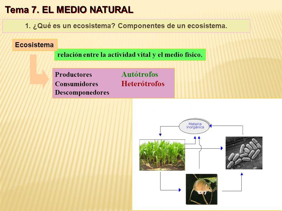 1. ¿Qué es un ecosistema Componentes de un ecosistema.