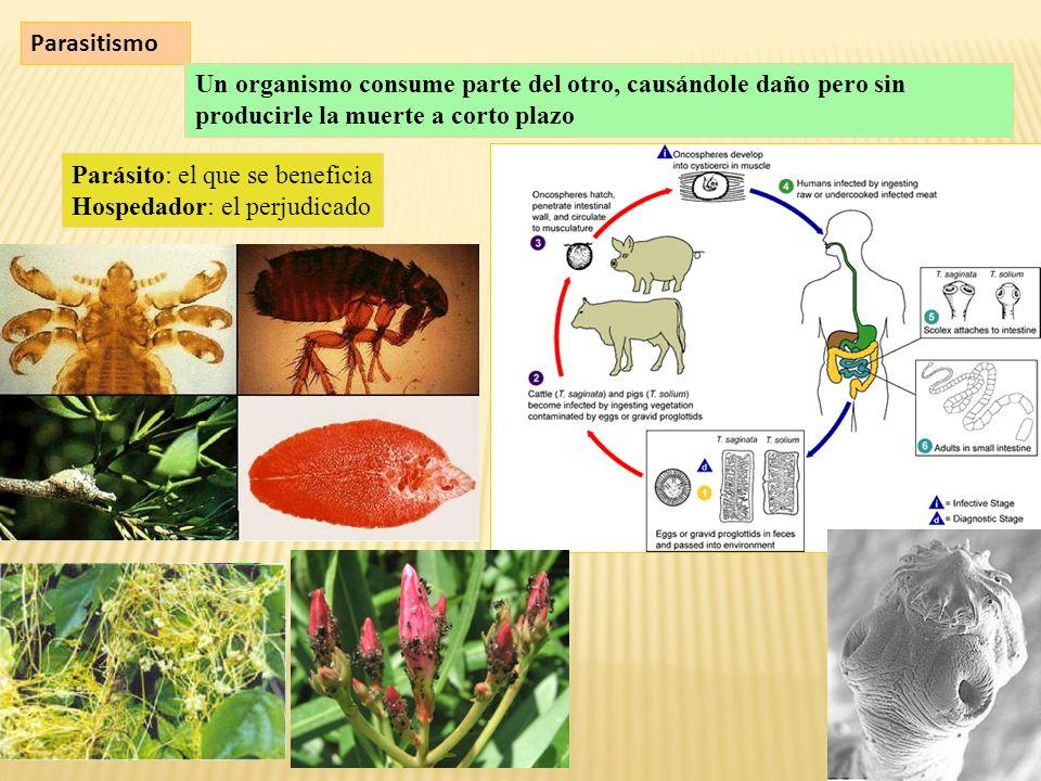 Parasitismo Un organismo consume parte del otro, causándole daño pero sin producirle la muerte a corto plazo.