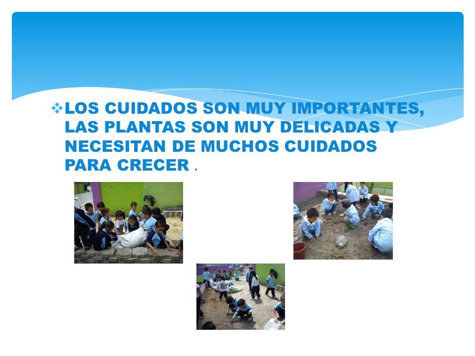 LOS CUIDADOS SON MUY IMPORTANTES, LAS PLANTAS SON MUY DELICADAS Y NECESITAN DE MUCHOS CUIDADOS PARA CRECER .