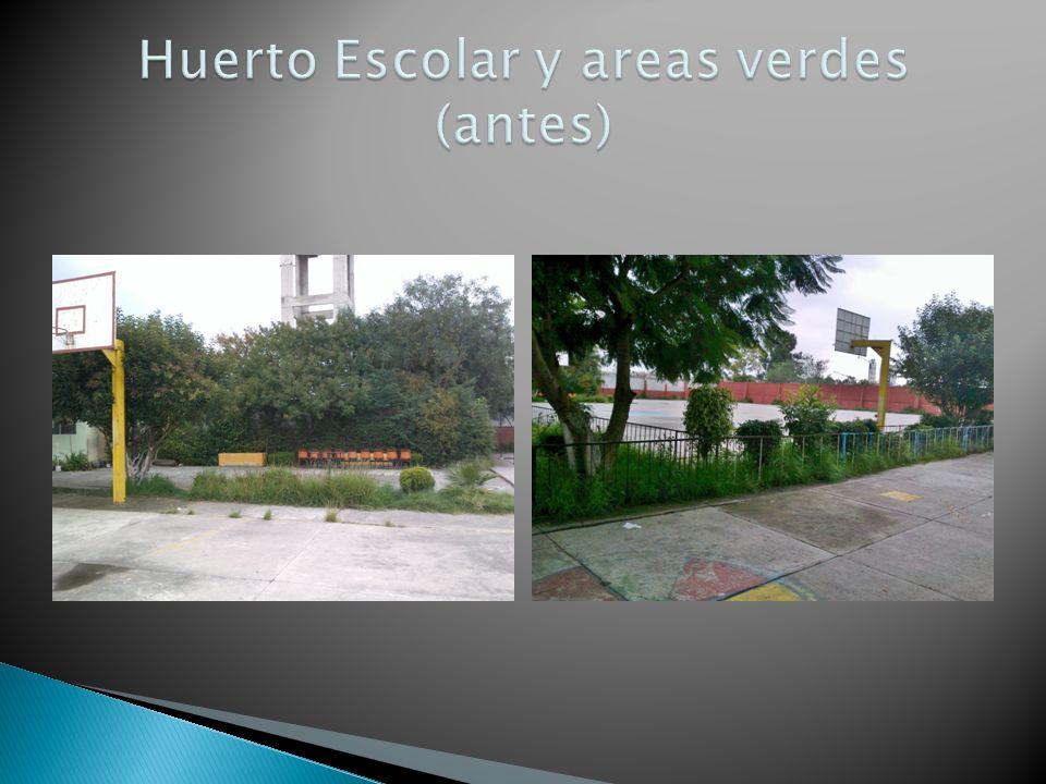 Huerto Escolar y areas verdes (antes)