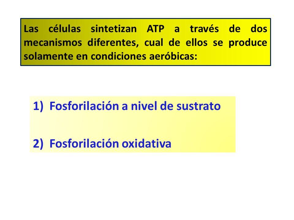 Fosforilación a nivel de sustrato Fosforilación oxidativa