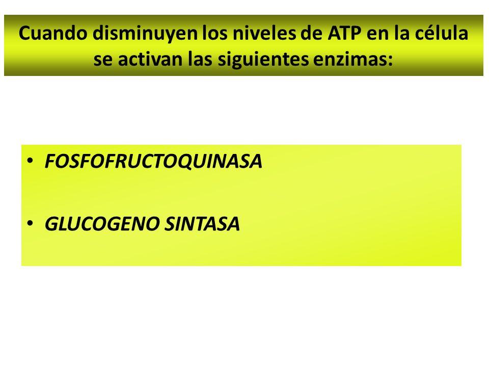 Cuando disminuyen los niveles de ATP en la célula se activan las siguientes enzimas: