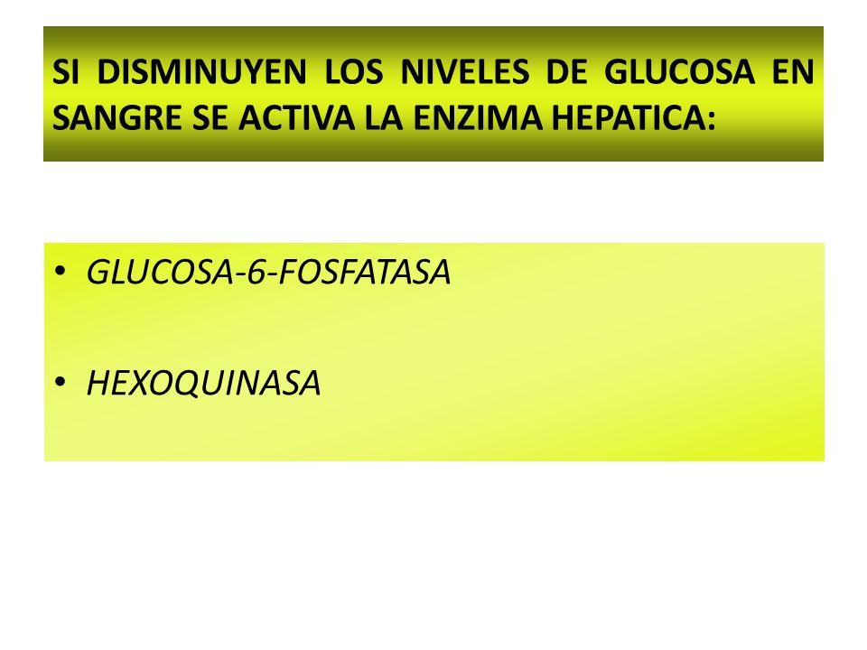 SI DISMINUYEN LOS NIVELES DE GLUCOSA EN SANGRE SE ACTIVA LA ENZIMA HEPATICA: