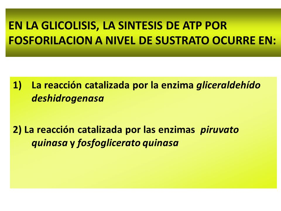 EN LA GLICOLISIS, LA SINTESIS DE ATP POR FOSFORILACION A NIVEL DE SUSTRATO OCURRE EN: