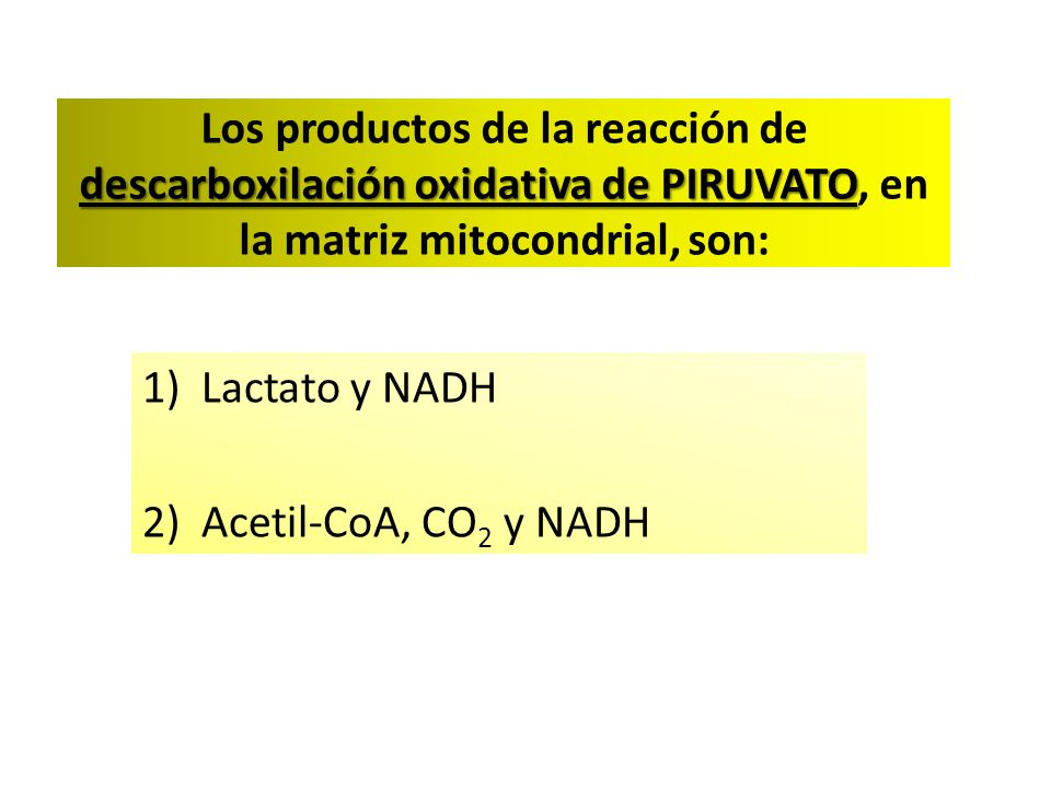 Lactato y NADH Acetil-CoA, CO2 y NADH
