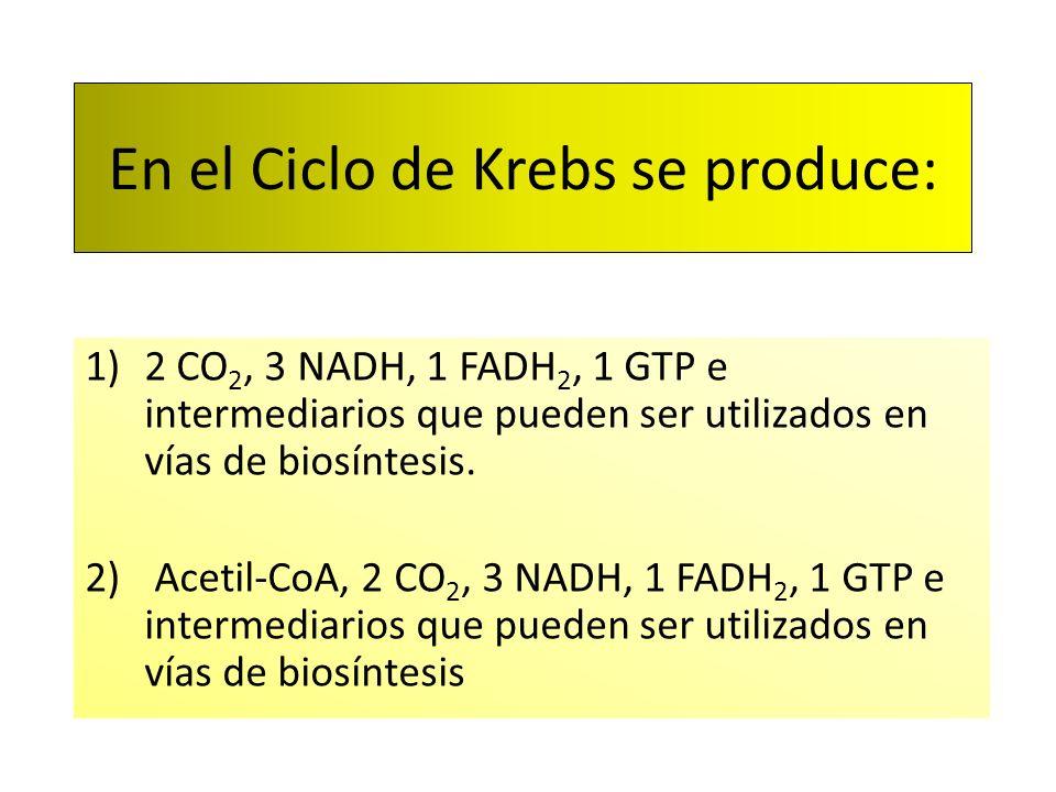 En el Ciclo de Krebs se produce: