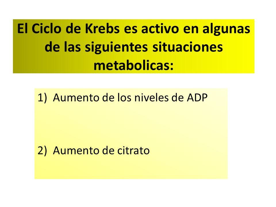 Aumento de los niveles de ADP Aumento de citrato