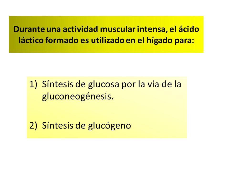 Síntesis de glucosa por la vía de la gluconeogénesis.