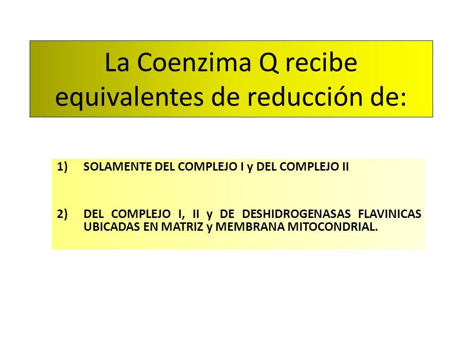 La Coenzima Q recibe equivalentes de reducción de: