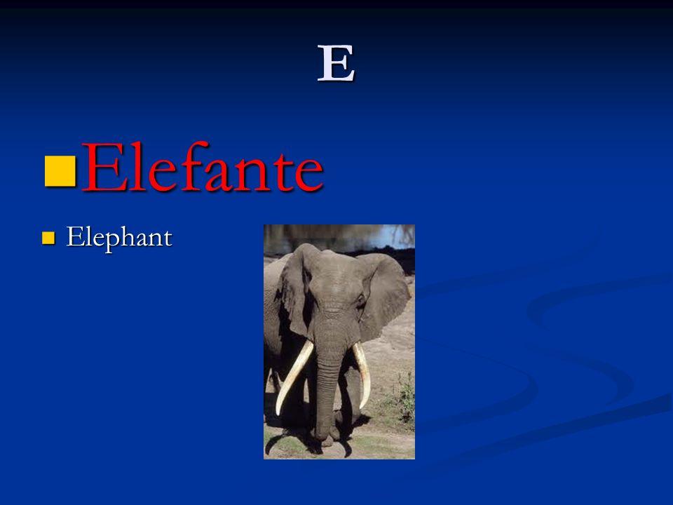 E Elefante Elephant