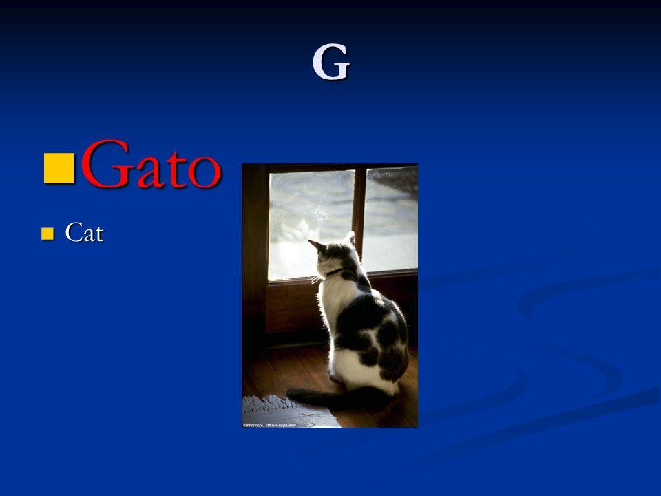G Gato Cat
