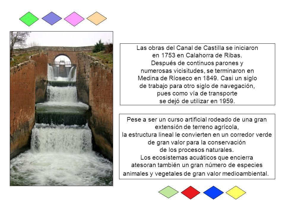 Las obras del Canal de Castilla se iniciaron