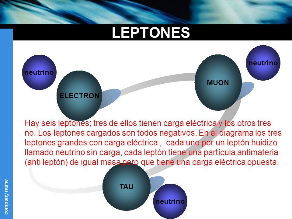 LEPTONES MUON. neutrino. Text. neutrino. ELECTRON.