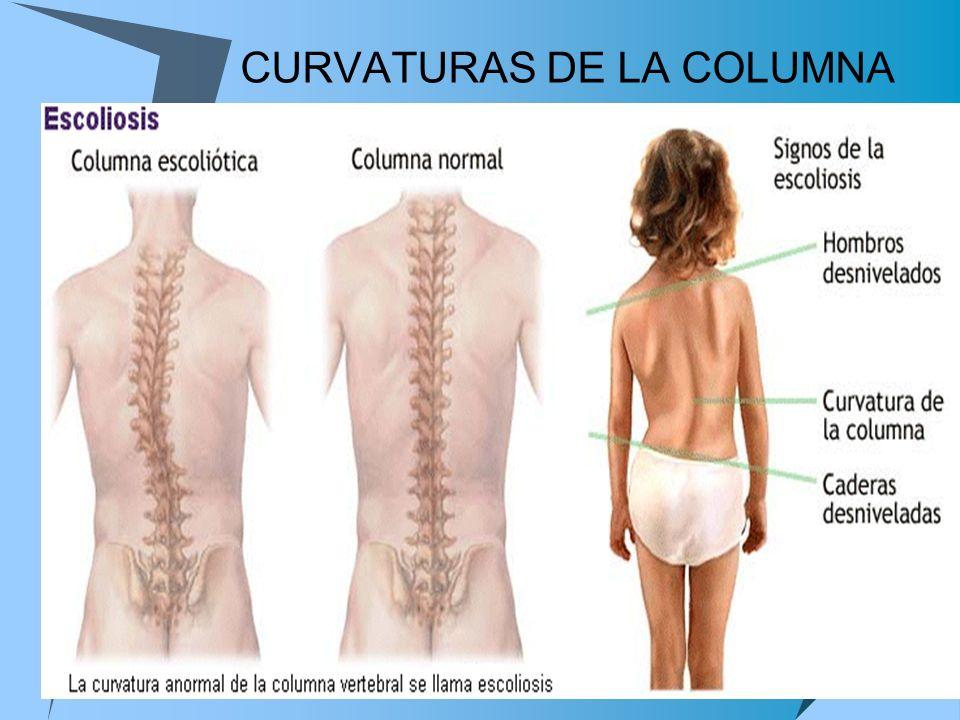 CURVATURAS DE LA COLUMNA