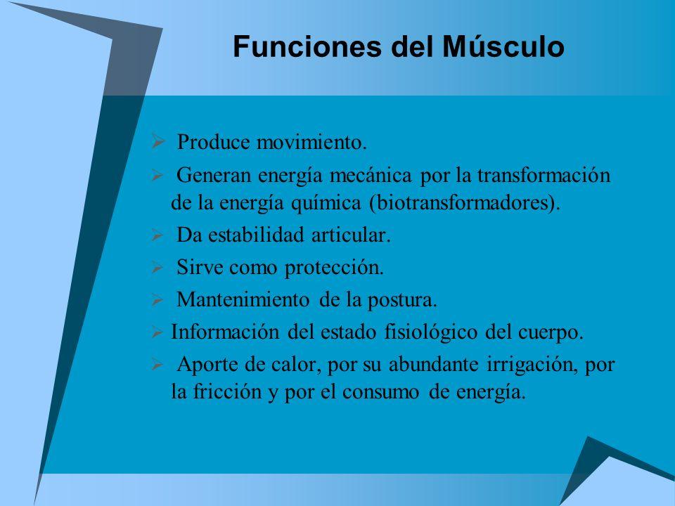 Funciones del Músculo Produce movimiento.