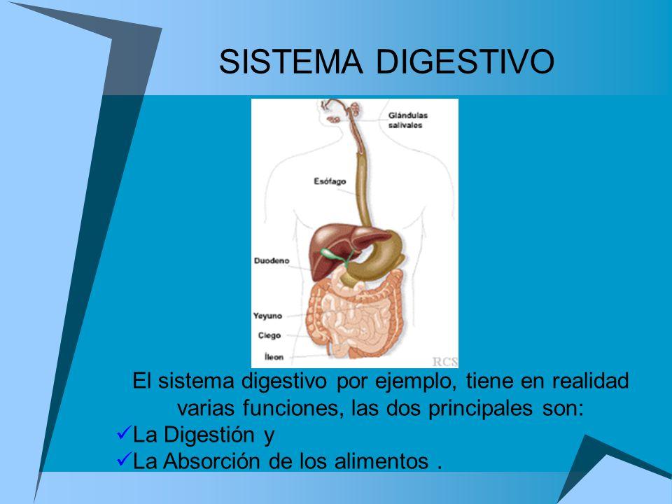 SISTEMA DIGESTIVOEl sistema digestivo por ejemplo, tiene en realidad varias funciones, las dos principales son: