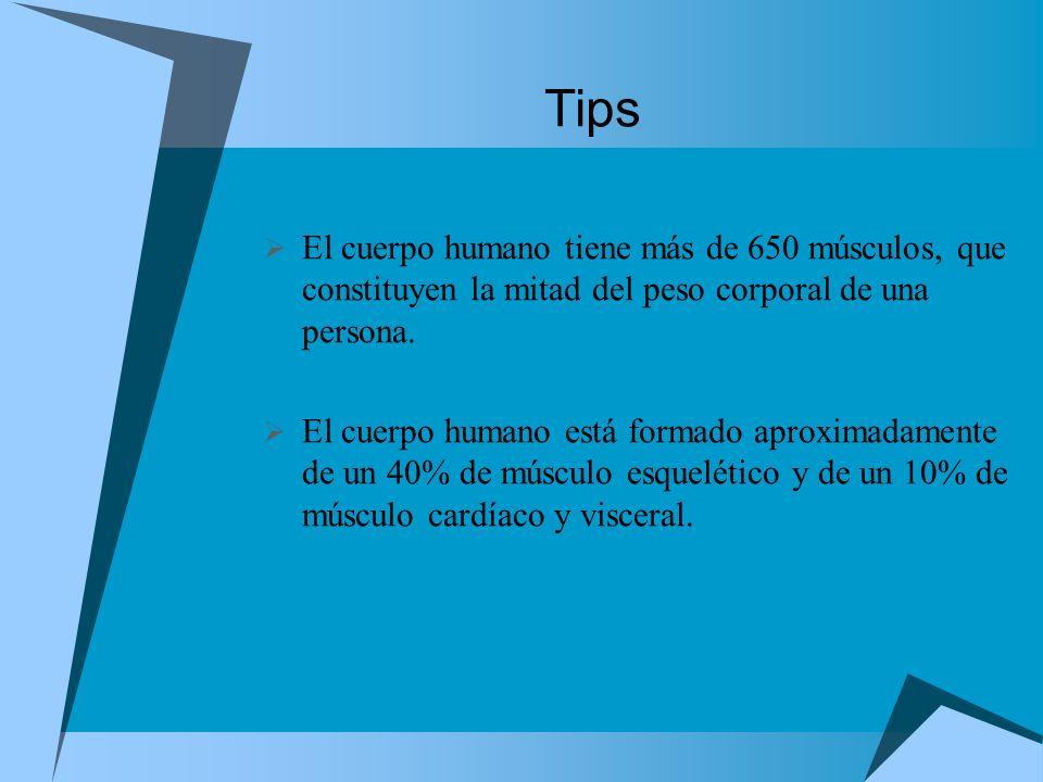 TipsEl cuerpo humano tiene más de 650 músculos, que constituyen la mitad del peso corporal de una persona.
