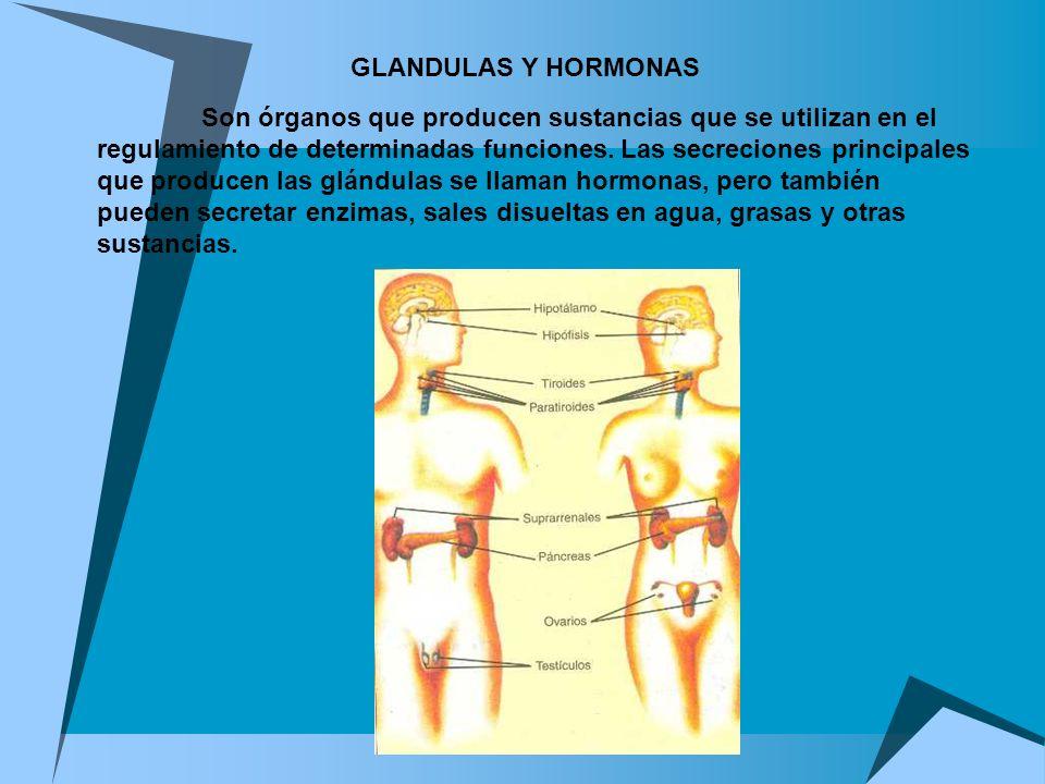GLANDULAS Y HORMONAS