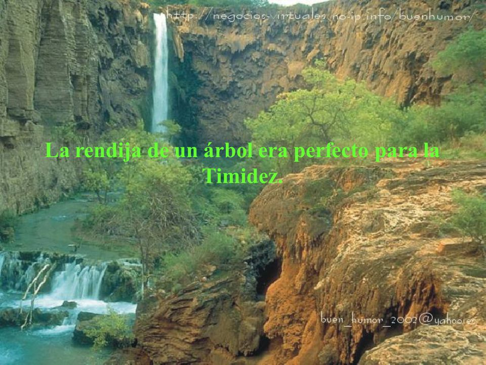 La rendija de un árbol era perfecto para la Timidez.