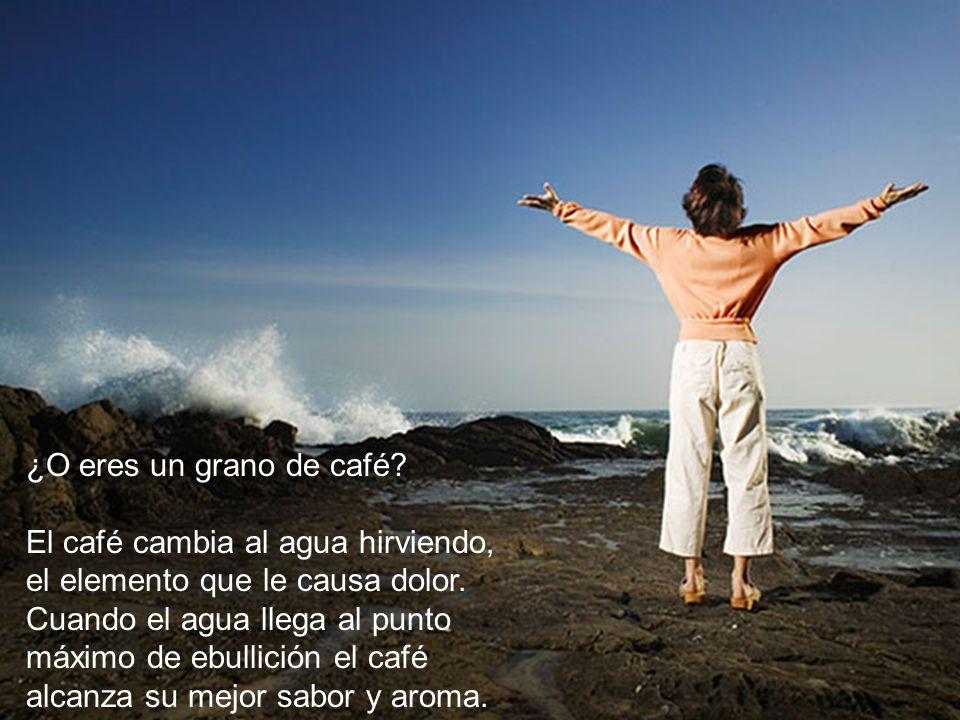 ¿O eres un grano de café El café cambia al agua hirviendo, el elemento que le causa dolor.