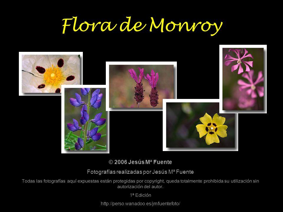 Fotografías realizadas por Jesús Mª Fuente