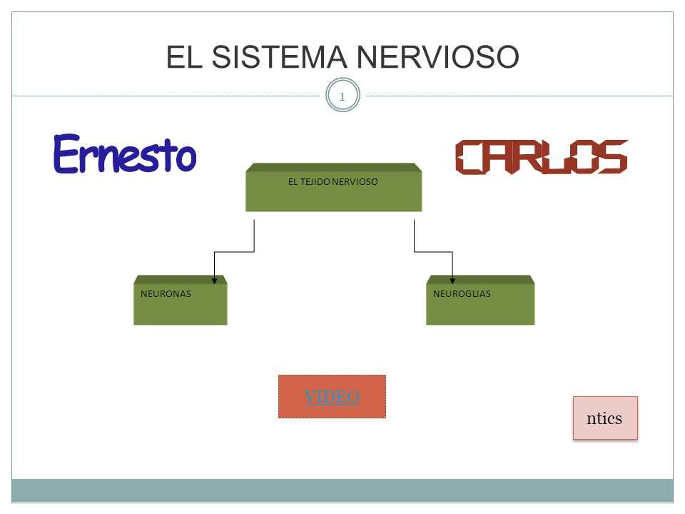 EL SISTEMA NERVIOSO EL TEJIDO NERVIOSO NEURONAS NEUROGLIAS VIDEO ntics