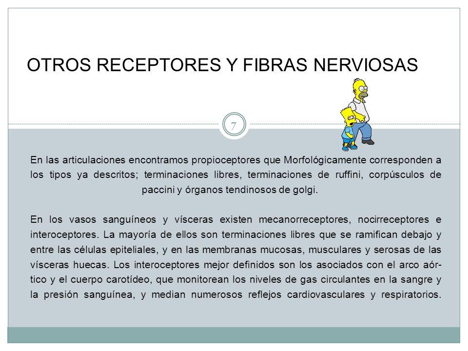 OTROS RECEPTORES Y FIBRAS NERVIOSAS