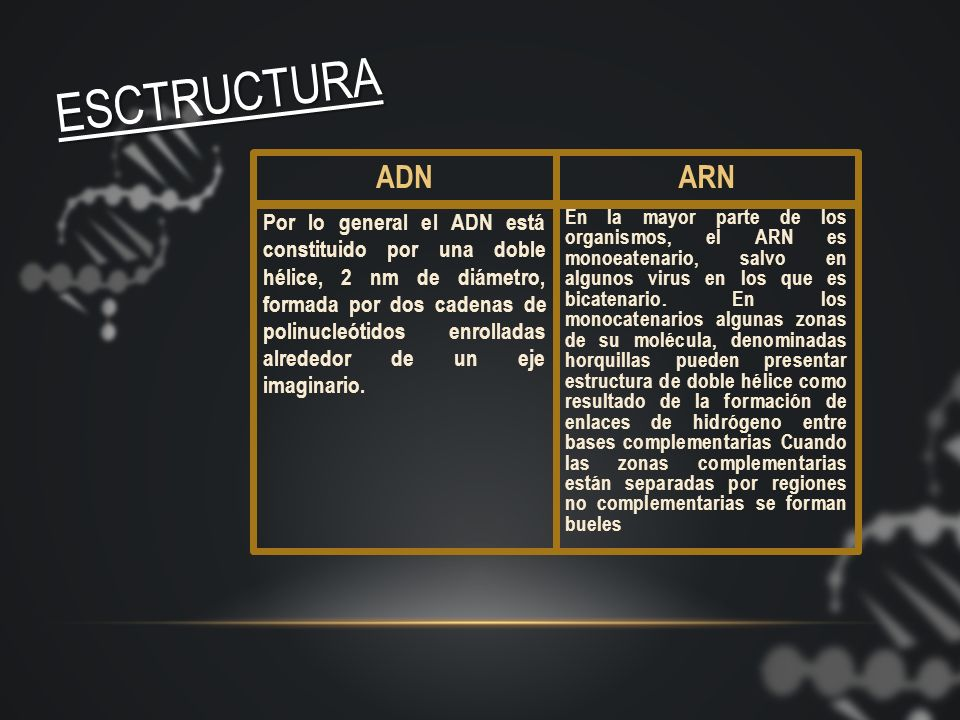 ESCTRUCTURA ADN. ARN.