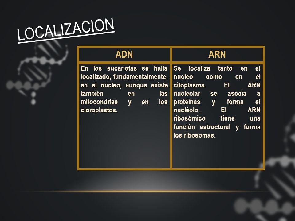 LOCALIZACION ADN. ARN.
