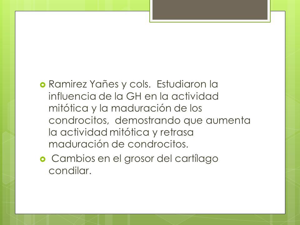 Ramirez Yañes y cols. Estudiaron la influencia de la GH en la actividad mitótica y la maduración de los condrocitos, demostrando que aumenta la actividad mitótica y retrasa maduración de condrocitos.