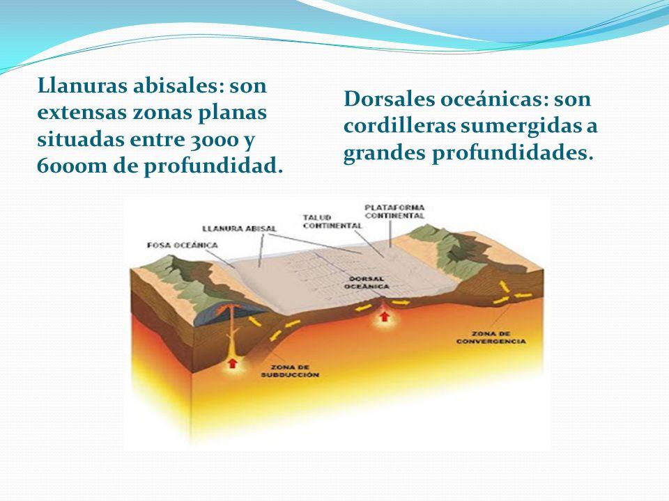 Llanuras abisales: son extensas zonas planas situadas entre 3000 y 6000m de profundidad.