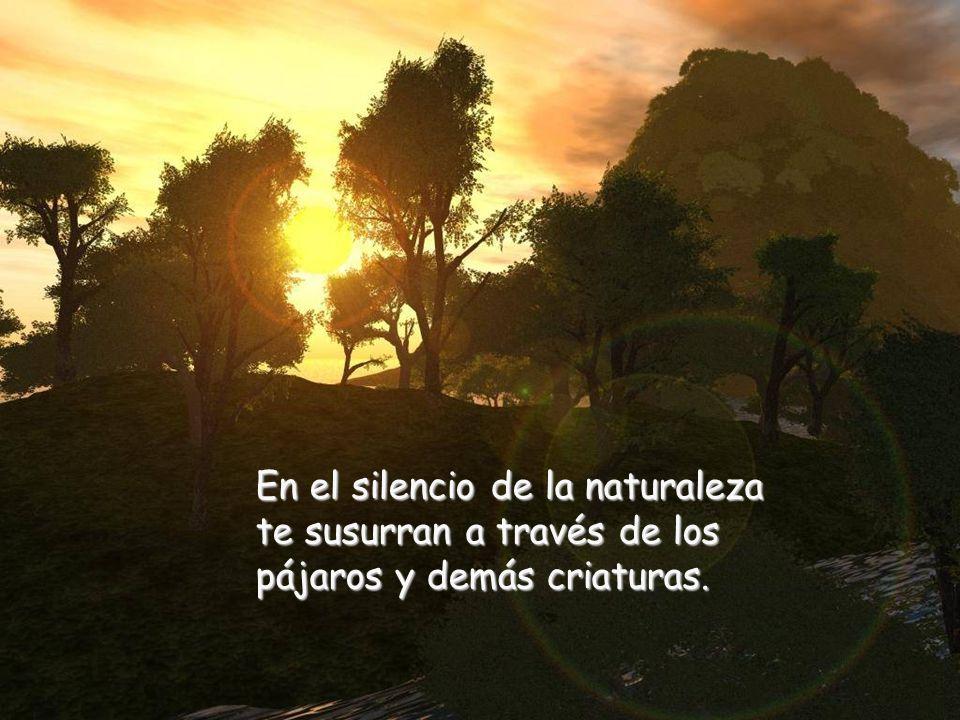 En el silencio de la naturaleza