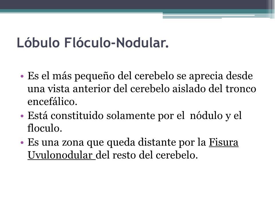 Lóbulo Flóculo-Nodular.