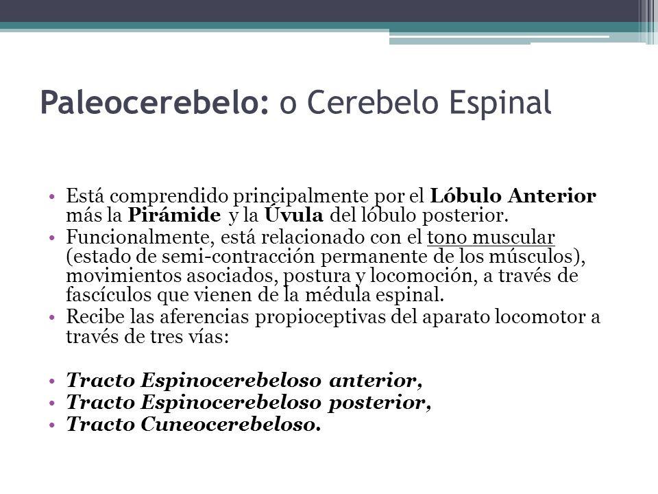 Paleocerebelo: o Cerebelo Espinal