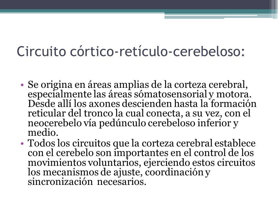 Circuito córtico-retículo-cerebeloso: