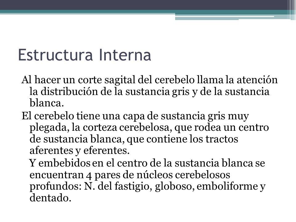 Estructura Interna Al hacer un corte sagital del cerebelo llama la atención la distribución de la sustancia gris y de la sustancia blanca.