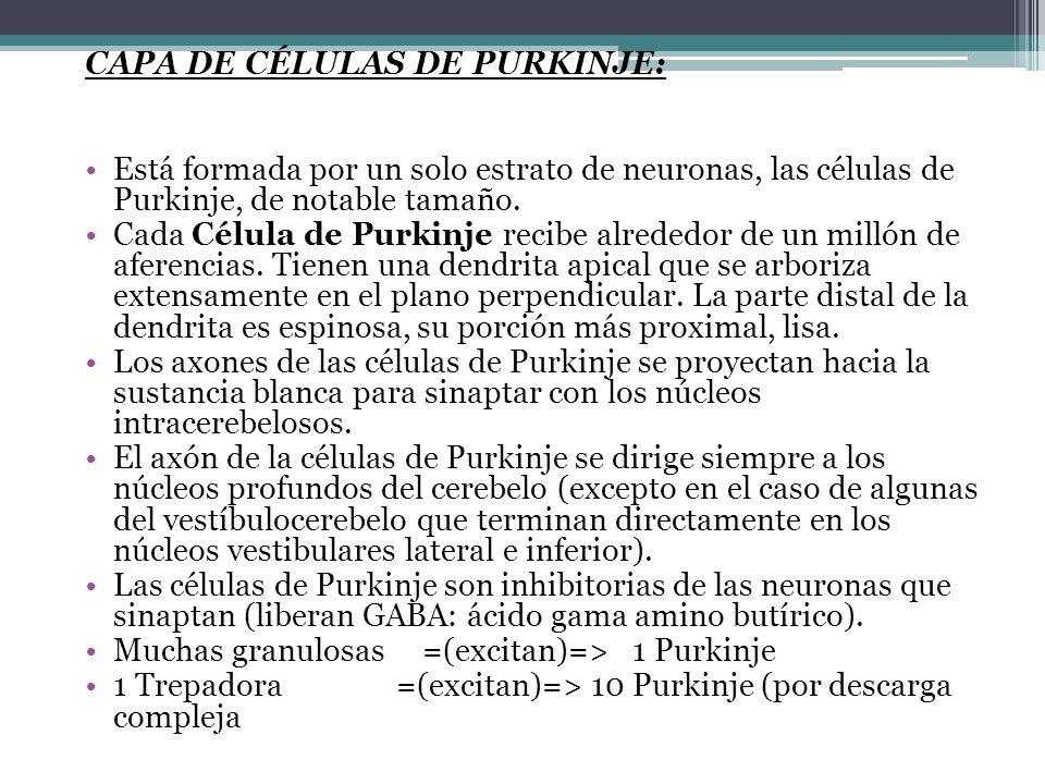 Capa de Células de Purkinje: